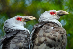 Two synchronic birds Royalty Free Stock Images