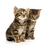 Two tabby kittens Stock Photo