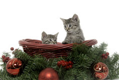 Two tabby kittens in holiday basket Stock Photography