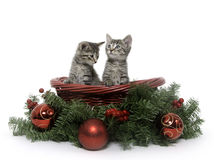 Two Tabby Kittens In Holiday Basket Royalty Free Stock Image