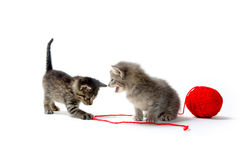 Two tabby kittens and yarn Royalty Free Stock Images