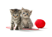 Two tabby kittens and yarn Stock Images