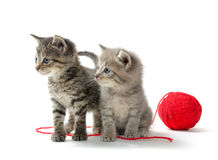 Two tabby kittens and yarn Royalty Free Stock Photos