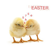 Two talking chicken. Two chicken talking about the easter Royalty Free Stock Photography