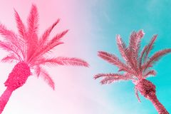 Two tall palm trees on toned gradient pink blue sky with light fluffy clouds. Creative trendy summer tropical background. Vacation