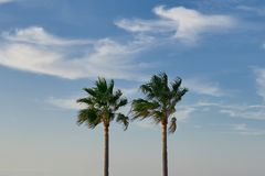 Two tall pam trees against a cloudy blue sky. With copy space symbolic of travel and summer vacations Stock Photo