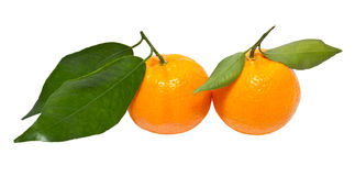 Two tangerine Royalty Free Stock Photography