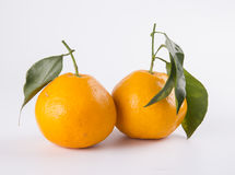 Two Tangerine. With green leaves on a light background Stock Image