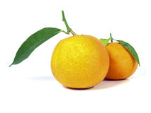 Two Tangerine Stock Images