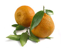 Two tangerines Royalty Free Stock Photography