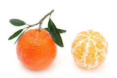 Two tangerines. royalty free stock image