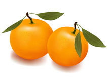 Two tangerines with leaves. Stock Photography