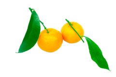 Two tangerines on a white background Royalty Free Stock Photography