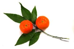 Two tangerines with white background Stock Images