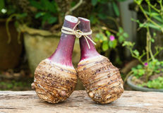 Two taro roots Royalty Free Stock Image