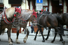Two teams of horses on street Royalty Free Stock Photo