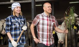 Two technicians posing near cowhouse in modern farm Stock Image