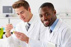 Two Technicians Working In Laboratory. Smiling Stock Images