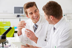 Two Technicians Working In Laboratory. Smiling A EachOver Stock Photography