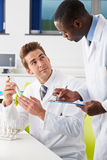 Two Technicians Working In Laboratory. Writing On Clip Bored Royalty Free Stock Photos
