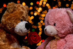 Two Teddie bear with white with red rose sitting Royalty Free Stock Image