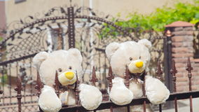 Two teddies bears on the fence in the wedding day stock video