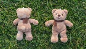 Two TEDDY BEAR brown color with scarf Royalty Free Stock Photos