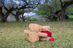Two TEDDY BEAR brown color sitting on grass Stock Images