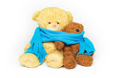 Two teddy-bear friends. Two teddy bears, bigger and smaller, are sitting close to each other wrapped in one cozy blue scarf royalty free stock photo