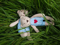 Two teddy bear on the grass stock photos