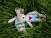 Two teddy bear on the grass Stock Photos
