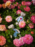 Two teddy bear in roses stock images