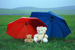 Two teddy bears. On green grass under red and blue umbrellas Stock Photos