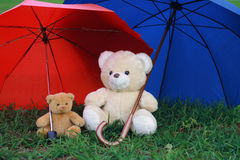Two teddy bears. On green grass and umbrellas Stock Photos