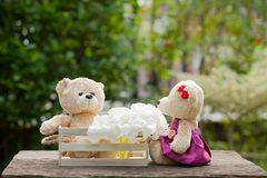 Two teddy bears in love sitting on wooden box and wood. And whit. E flowers Concept of love understanding and tenderness.  With lens flare, Natural background Royalty Free Stock Photos