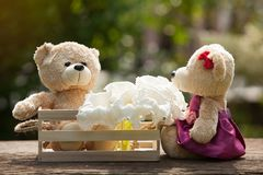 Two teddy bears in love sitting on wooden box and wood. And whit. E flowers Concept of love understanding and tenderness.  With lens flare, Natural background Royalty Free Stock Image