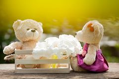 Two teddy bears in love sitting on wooden box and wood. And whit. E flowers Concept of love understanding and tenderness.  With lens flare, Natural background Stock Photo