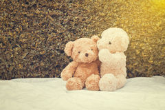 Two teddy bears sitting on white fabric. Tree leaf bushes green fence, Texture background Stock Image