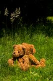 Two teddybears in the grass. Teddy couple back against back Stock Image