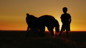 Two teen friends playing with a dog at sunset. In the picturesque countryside stock video