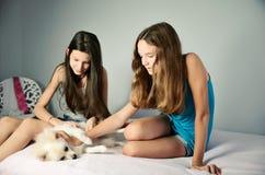 Two teen girls stroking pomeranian. horizontal Royalty Free Stock Image