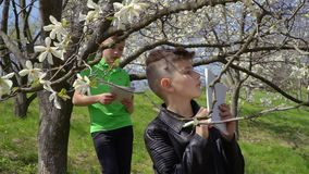 Two teenagers makes laboratory work and explores bloom of flowers on trees. Teenagers makes biology laboratory work in the park. The boys explores flowers on the stock video