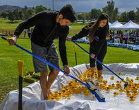 Two teens sweep rubber duckies to the start line at the Rubber Ducky Festival stock photography