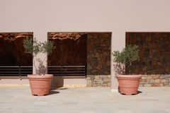 Two terracotta pots with olive trees on terrace of stone mediter Stock Image