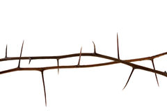 Two thorny tree twigs. Two dried tree twigs with long thorns isolated on white stock photos