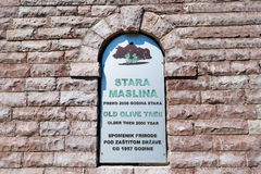 Two thousand years old olive tree sign Stock Photos