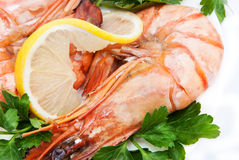 Two tiger shrimps with lemon slice and parsley Stock Photography