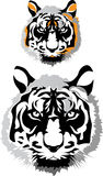 Two tigers. Vector illustration. A colour and black-and-white head of a tiger Stock Photography
