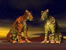 Two tigers in the desert Stock Images