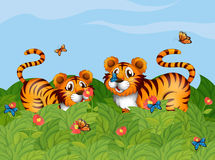 Two tigers playing in the garden. Illustration of two tigers playing in the garden Stock Photography